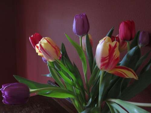 My favorite indoor flowers, providing color and inspiration on a dark day