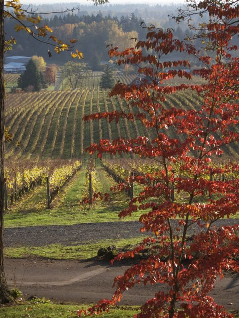 Fall in the wine country: c'est magnifique…...