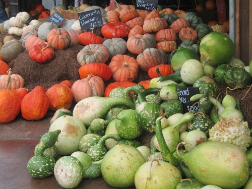 Pumpkin heaven: full of nutrition and wonderful to look at